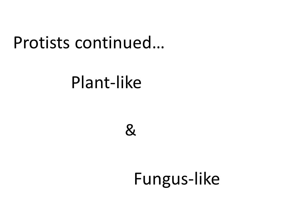 Plant-like Protists continued… & Fungus-like