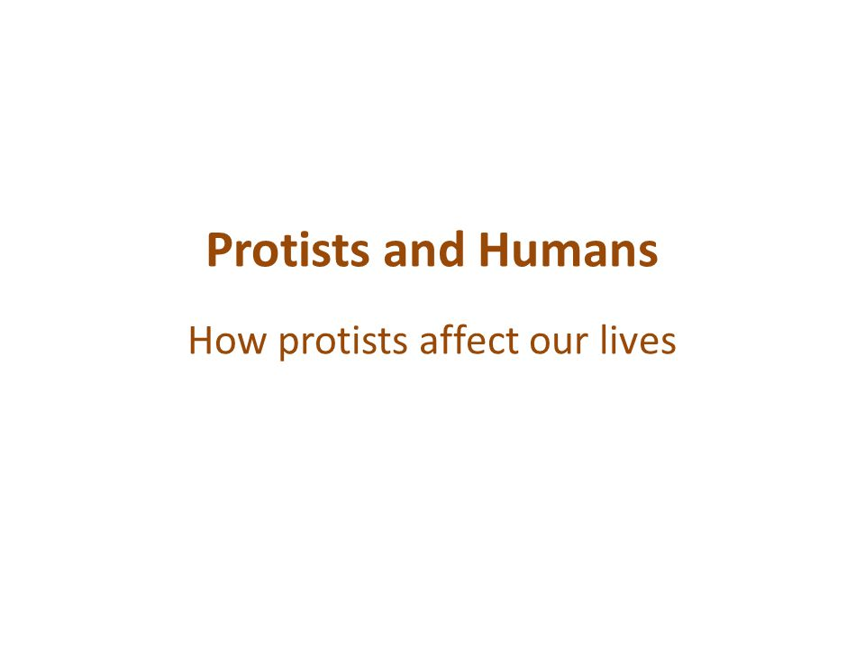 Protists and Humans How protists affect our lives