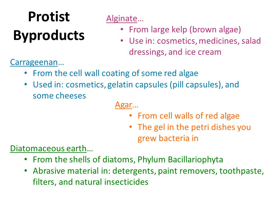 Protist Byproducts Alginate… From large kelp (brown algae) Use in: cosmetics, medicines, salad dressings, and ice cream Carrageenan… From the cell wall coating of some red algae Used in: cosmetics, gelatin capsules (pill capsules), and some cheeses Agar… From cell walls of red algae The gel in the petri dishes you grew bacteria in Diatomaceous earth… From the shells of diatoms, Phylum Bacillariophyta Abrasive material in: detergents, paint removers, toothpaste, filters, and natural insecticides