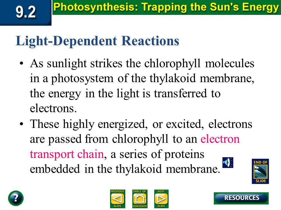 Section 9.2 Summary – pages 225-230 Light-Dependent Reactions As sunlight strikes the chlorophyll molecules in a photosystem of the thylakoid membrane, the energy in the light is transferred to electrons.