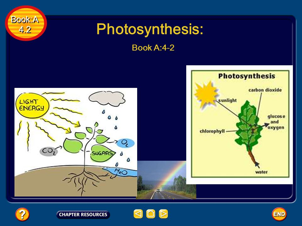 Book:A 4.2 Book:A 4.2 Photosynthesis: Book A:4-2
