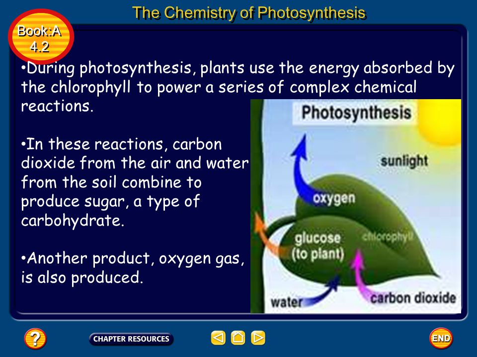 Book:A 4.2 Book:A 4.2 The Chemistry of Photosynthesis During photosynthesis, plants use the energy absorbed by the chlorophyll to power a series of complex chemical reactions.
