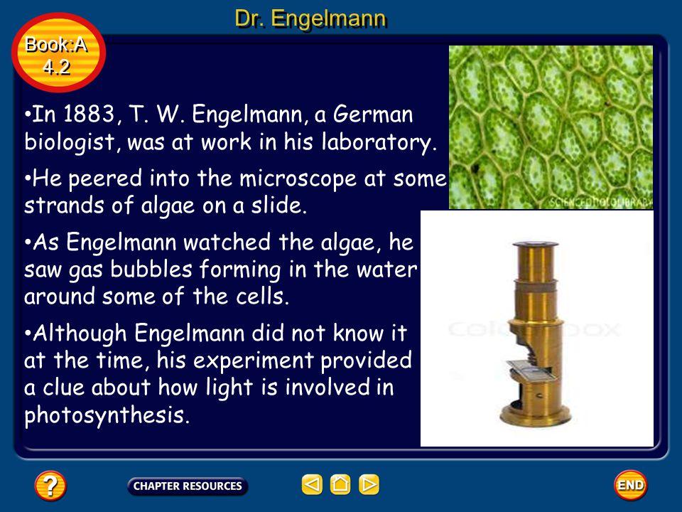 Dr. Engelmann In 1883, T. W. Engelmann, a German biologist, was at work in his laboratory.