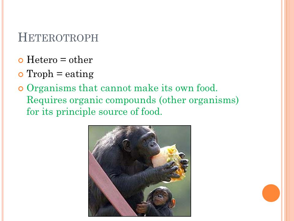 H ETEROTROPH Hetero = other Troph = eating Organisms that cannot make its own food. Requires organic compounds (other organisms) for its principle sou