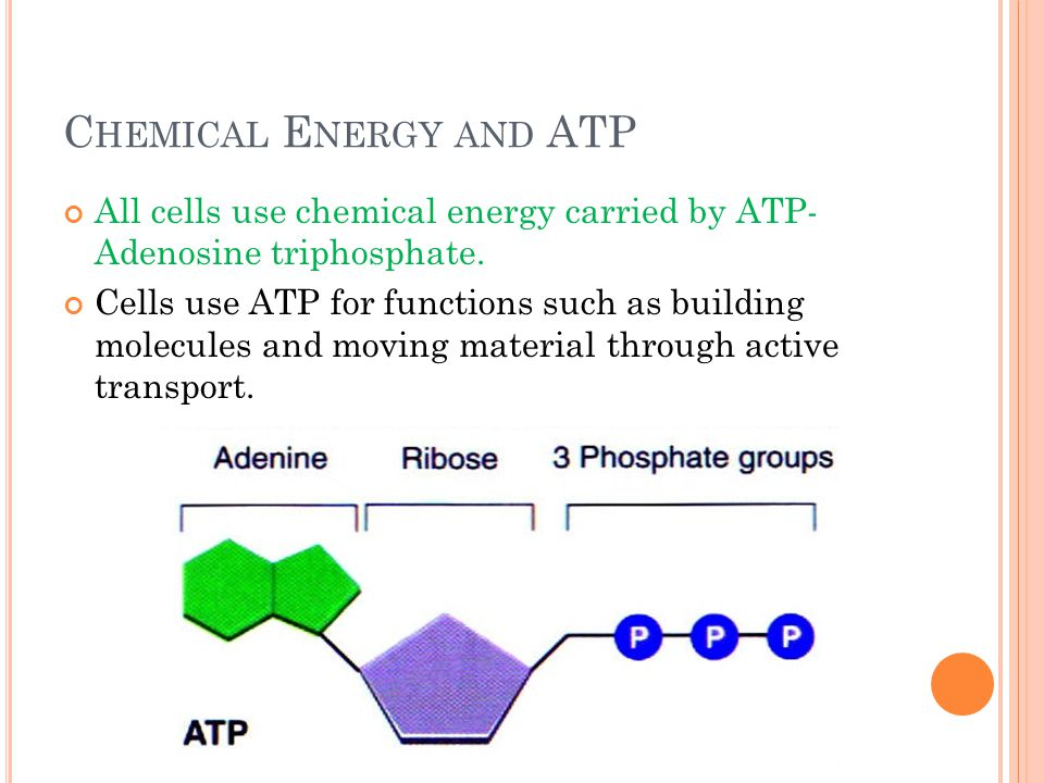 C HEMICAL E NERGY AND ATP All cells use chemical energy carried by ATP- Adenosine triphosphate. Cells use ATP for functions such as building molecules