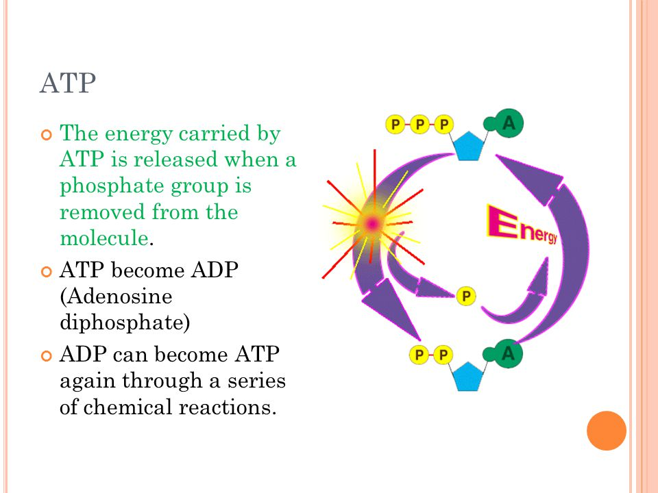 ATP The energy carried by ATP is released when a phosphate group is removed from the molecule. ATP become ADP (Adenosine diphosphate) ADP can become A