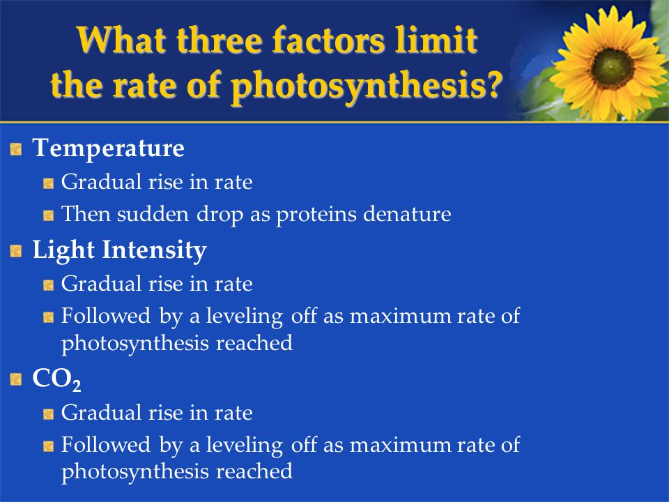 What three factors limit the rate of photosynthesis.