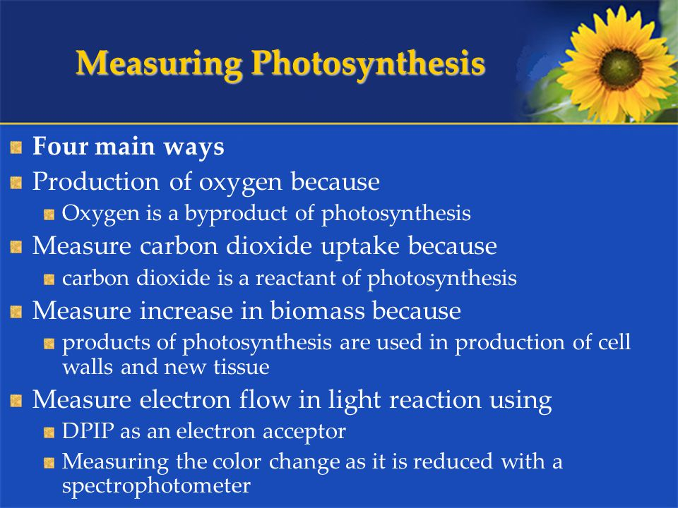 Measuring Photosynthesis Four main ways Production of oxygen because Oxygen is a byproduct of photosynthesis Measure carbon dioxide uptake because carbon dioxide is a reactant of photosynthesis Measure increase in biomass because products of photosynthesis are used in production of cell walls and new tissue Measure electron flow in light reaction using DPIP as an electron acceptor Measuring the color change as it is reduced with a spectrophotometer