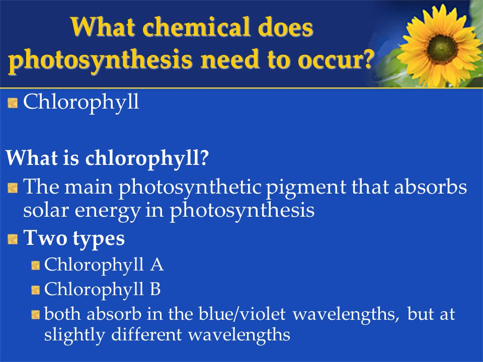 What chemical does photosynthesis need to occur. Chlorophyll What is chlorophyll.