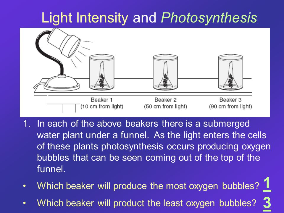 1.In each of the above beakers there is a submerged water plant under a funnel. As the light enters the cells of these plants photosynthesis occurs pr