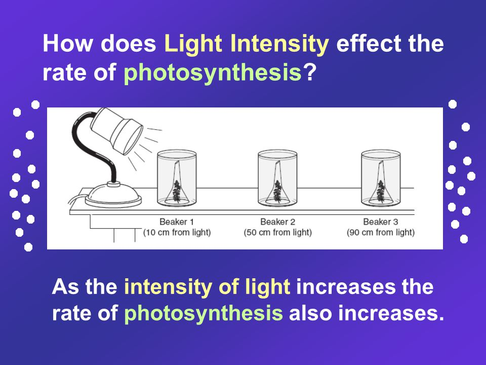 As the intensity of light increases the rate of photosynthesis also increases. How does Light Intensity effect the rate of photosynthesis?
