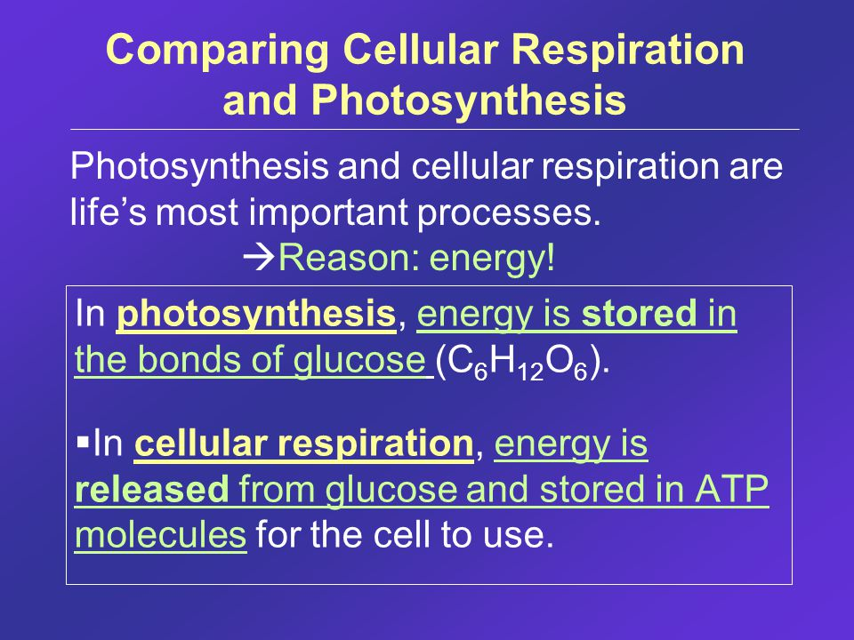 Comparing Cellular Respiration and Photosynthesis In photosynthesis, energy is stored in the bonds of glucose (C 6 H 12 O 6 ).  In cellular respirati