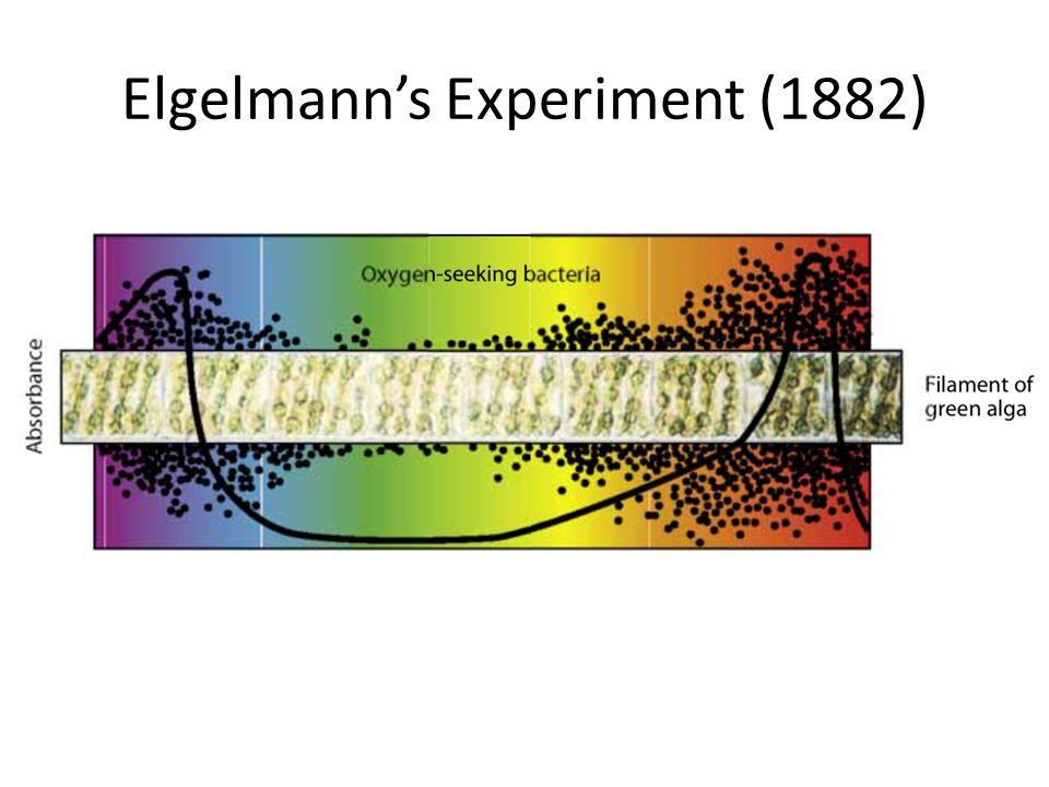 Elgelmann's Experiment (1882)