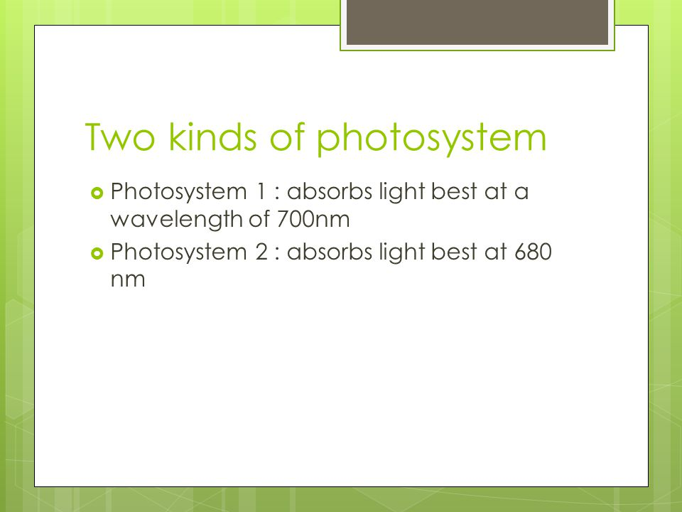 Two kinds of photosystem  Photosystem 1 : absorbs light best at a wavelength of 700nm  Photosystem 2 : absorbs light best at 680 nm