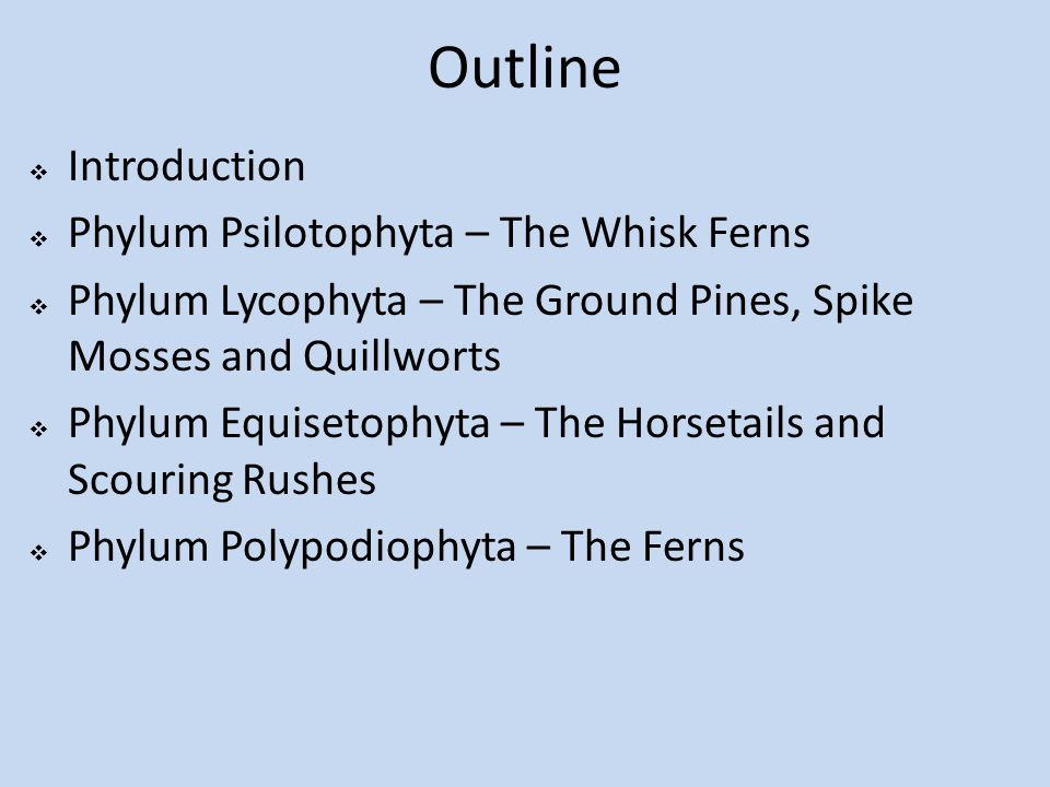 Outline  Introduction  Phylum Psilotophyta – The Whisk Ferns  Phylum Lycophyta – The Ground Pines, Spike Mosses and Quillworts  Phylum Equisetophyta – The Horsetails and Scouring Rushes  Phylum Polypodiophyta – The Ferns