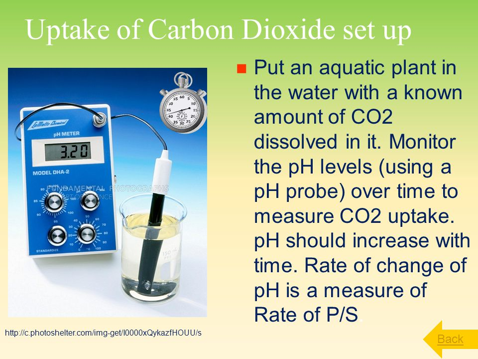 Uptake of Carbon Dioxide set up Put an aquatic plant in the water with a known amount of CO2 dissolved in it.