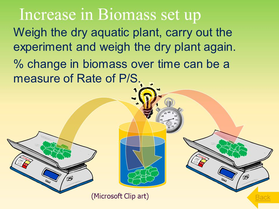 Increase in Biomass set up Weigh the dry aquatic plant, carry out the experiment and weigh the dry plant again.