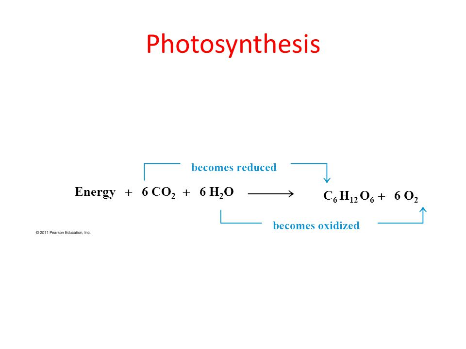 Photosynthesis Energy  6 CO 2  6 H 2 O C 6 H 12 O 6  6 O 2 becomes reduced becomes oxidized