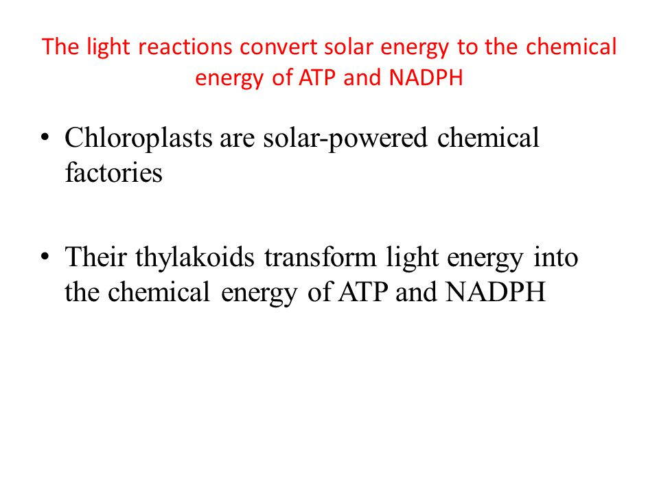 The light reactions convert solar energy to the chemical energy of ATP and NADPH Chloroplasts are solar-powered chemical factories Their thylakoids transform light energy into the chemical energy of ATP and NADPH