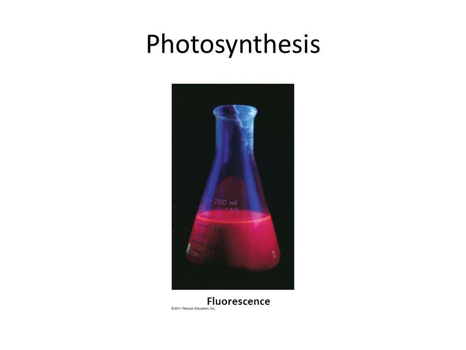 Photosynthesis Fluorescence