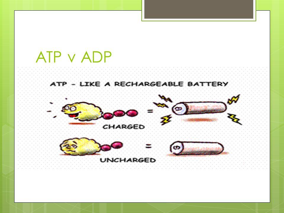 ATP v ADP