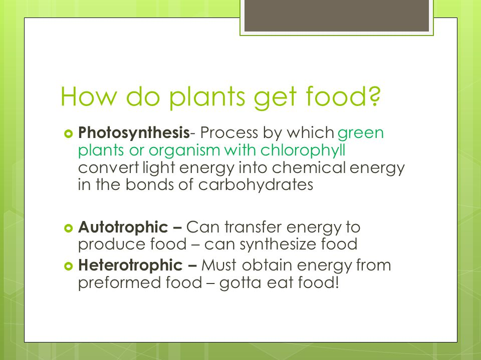 How do plants get food.