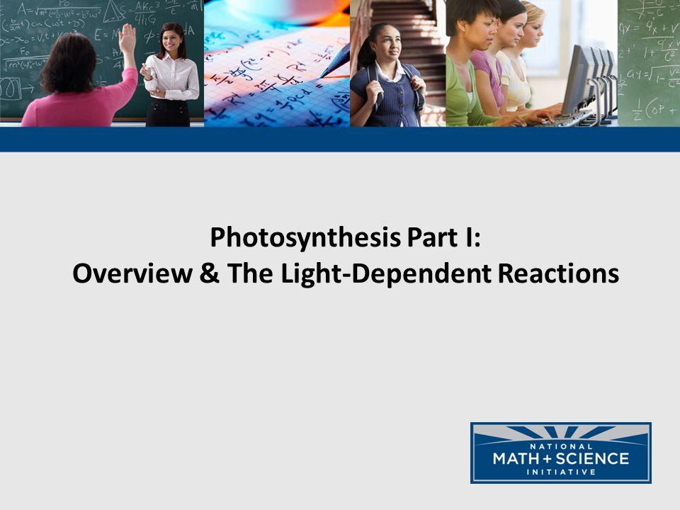 thylakoid membrane thylakoid space stroma Photosystem II (P680) Photosystem I (P700) NADP + ATP synthase H+H+ H+H+ H+H+ H+H+ H+H+ H+H+ H+H+ H+H+ H+H+ H+H+ H+H+ H+H+ H+H+ H+H+ ADP P 5000 e - O H H e- 4999 e - 5000 e - NADPH ATP H+H+ H+H+ O 5000 e - (2 H + & ½ O 2 ) e-