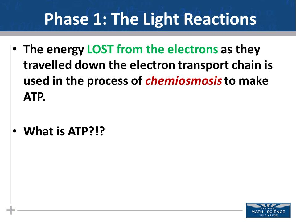 Phase 1: The Light Reactions The energy LOST from the electrons as they travelled down the electron transport chain is used in the process of chemiosmosis to make ATP.
