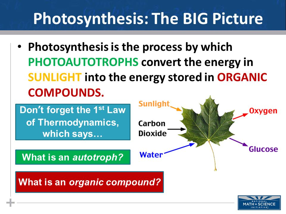Photosynthesis: The BIG Picture Photosynthesis is the process by which PHOTOAUTOTROPHS convert the energy in SUNLIGHT into the energy stored in ORGANIC COMPOUNDS.