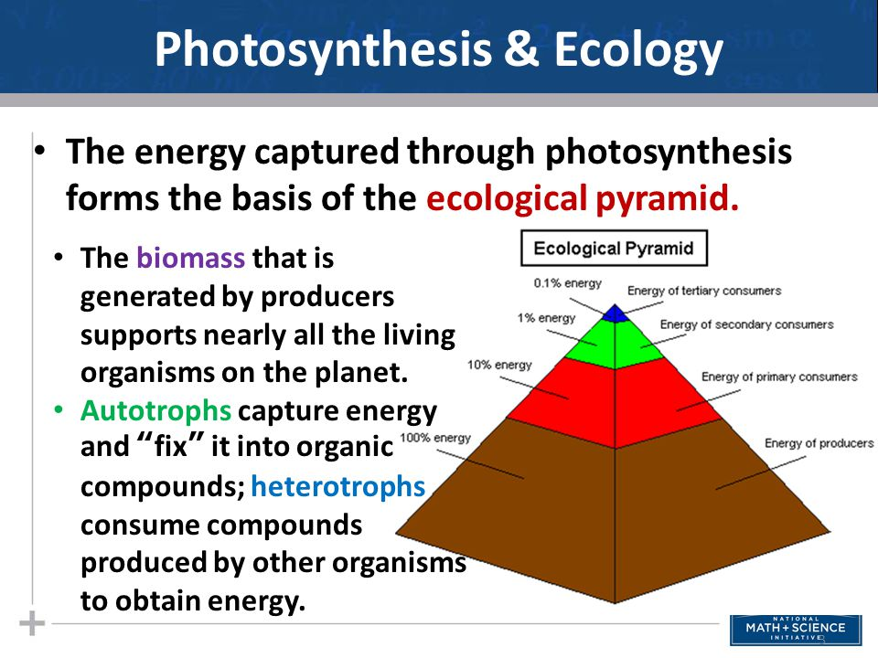 Leaves: The Photosynthetic Organs of Plants Leaves perform most of the photosynthesis in plants.