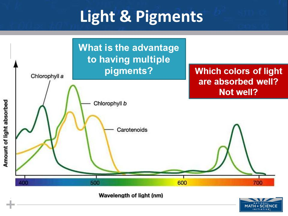 Light & Pigments 9 What is the advantage to having multiple pigments.