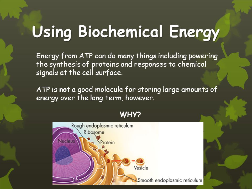 Using Biochemical Energy Energy from ATP can do many things including powering the synthesis of proteins and responses to chemical signals at the cell surface.