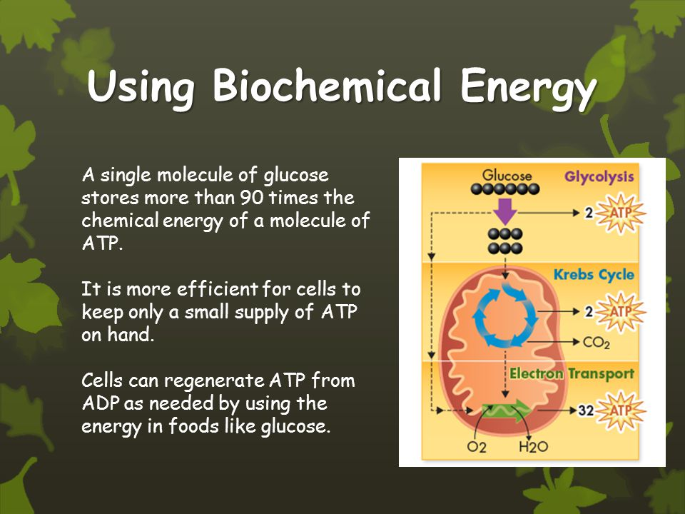 Using Biochemical Energy A single molecule of glucose stores more than 90 times the chemical energy of a molecule of ATP.