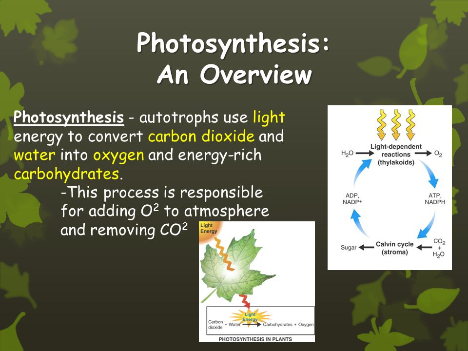 Photosynthesis: An Overview Photosynthesis - autotrophs use light energy to convert carbon dioxide and water into oxygen and energy-rich carbohydrates.