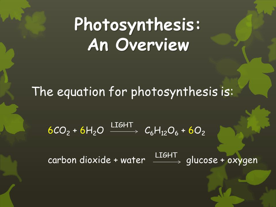 Photosynthesis: An Overview The equation for photosynthesis is: 6CO 2 + 6H 2 O C 6 H 12 O 6 + 6O 2 carbon dioxide + water glucose + oxygen LIGHT