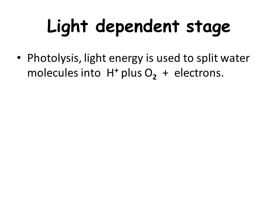Light dependent stage Photolysis, light energy is used to split water molecules into H + plus O 2 + electrons.