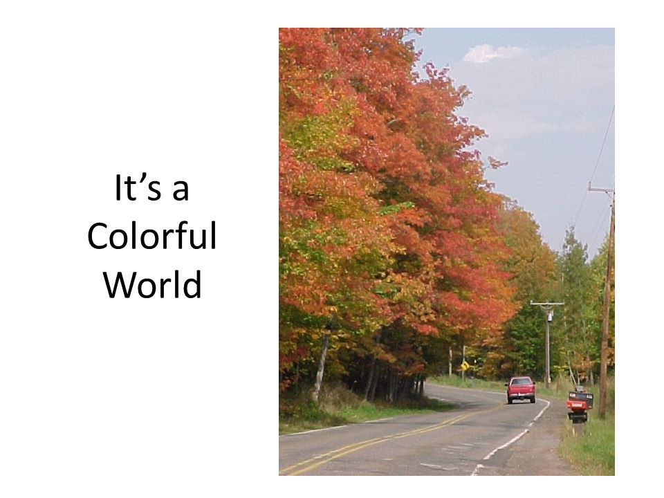 It's a Colorful World