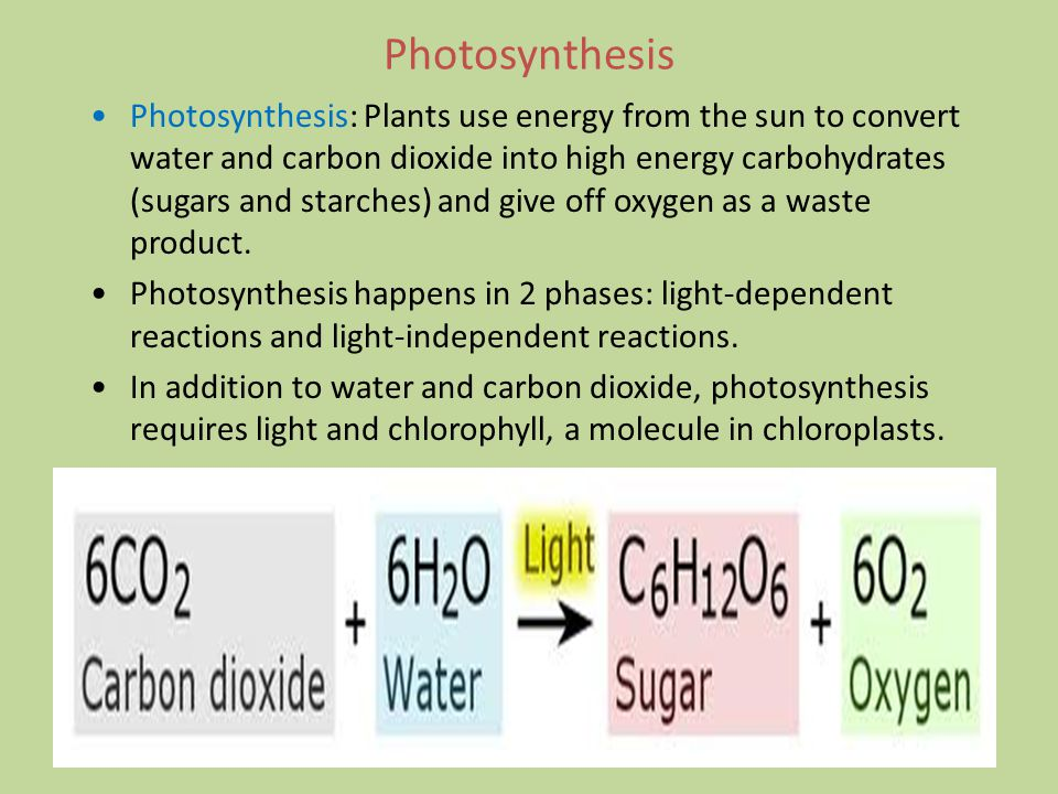 Photosynthesis Photosynthesis: Plants use energy from the sun to convert water and carbon dioxide into high energy carbohydrates (sugars and starches) and give off oxygen as a waste product.