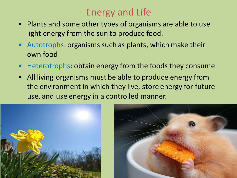 Energy and Life Plants and some other types of organisms are able to use light energy from the sun to produce food.