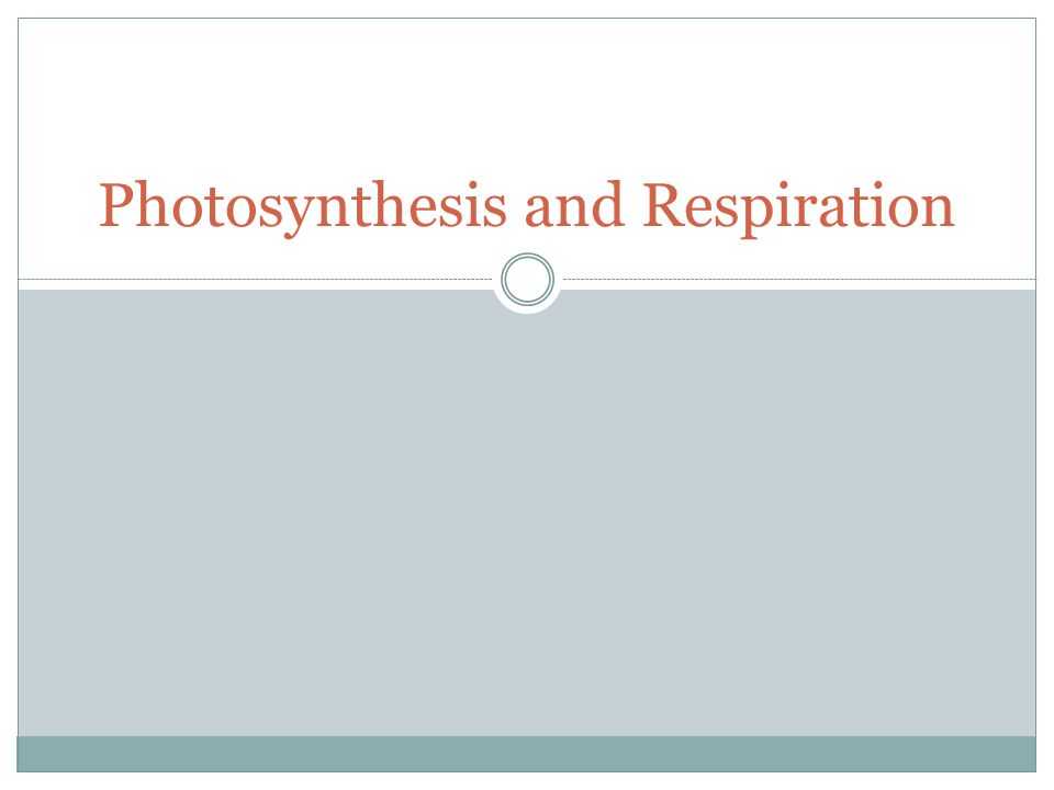 What are the Reactants of Photosynthesis? Carbon Dioxide, Water and Sunlight