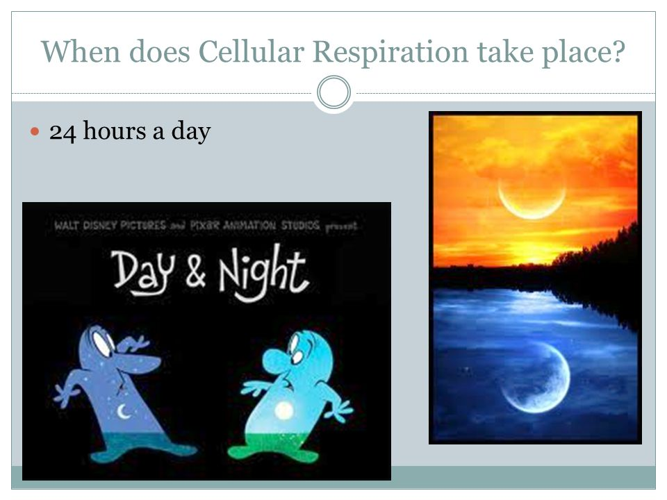 When does Cellular Respiration take place? 24 hours a day