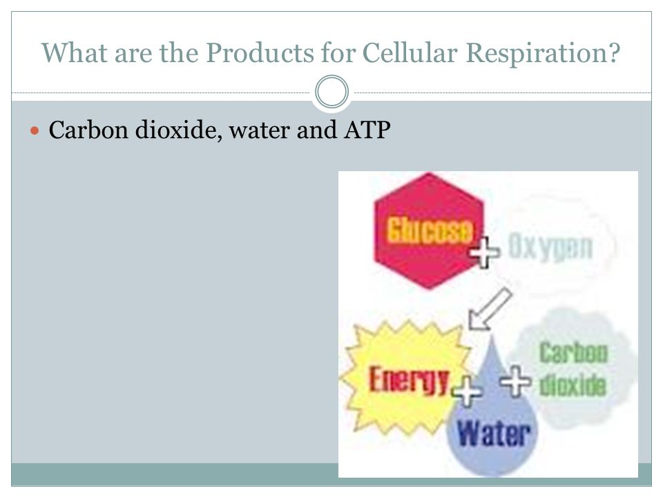 What are the Products for Cellular Respiration? Carbon dioxide, water and ATP