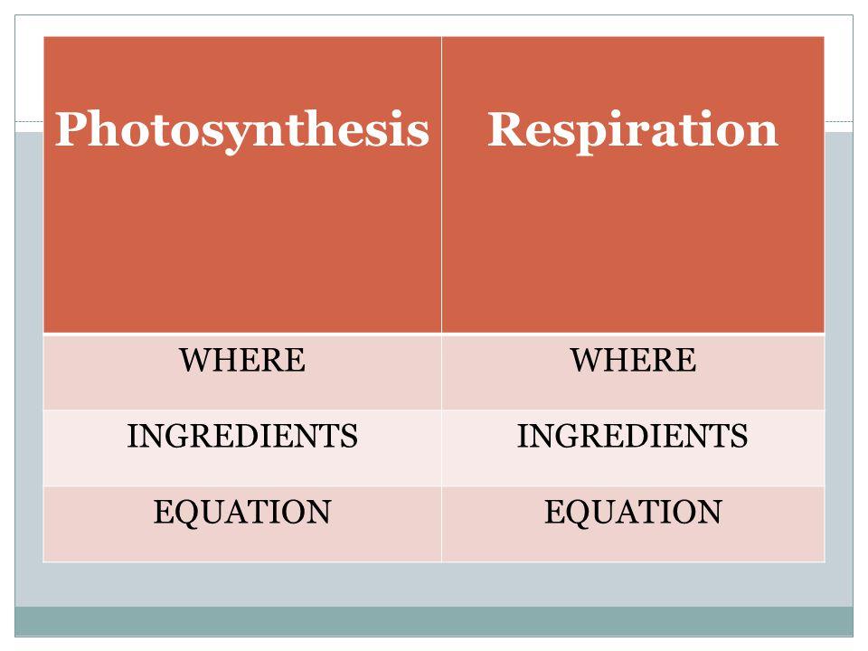 PhotosynthesisRespiration WHERE INGREDIENTS EQUATION
