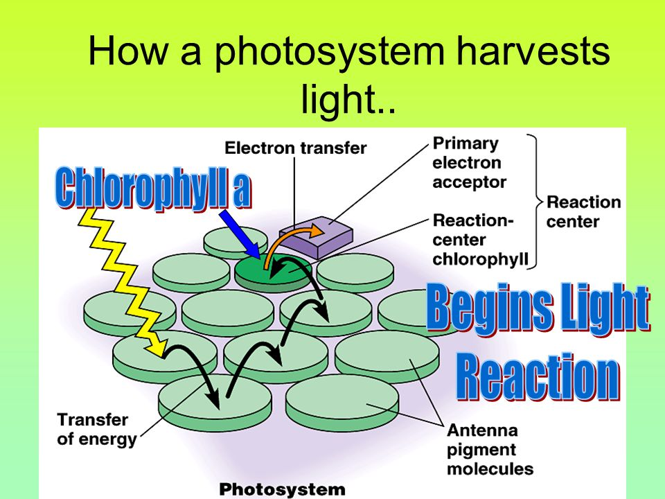 How a photosystem harvests light..