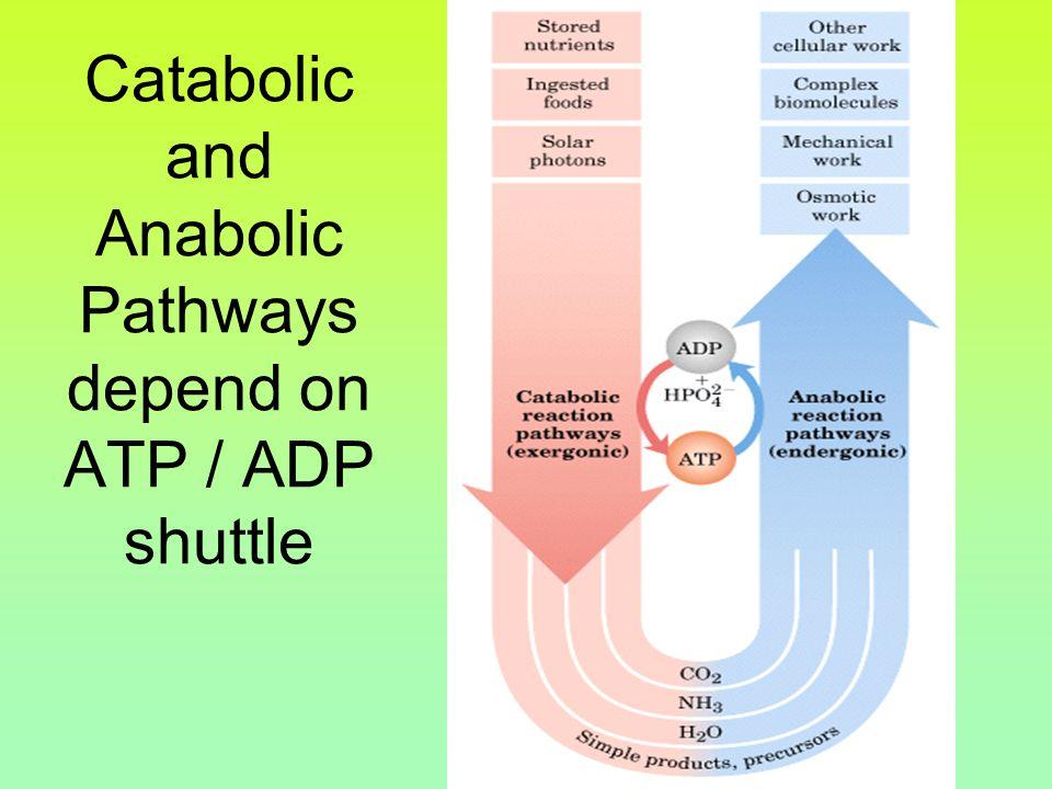 Chemiosmosis ATP synthesisPowers ATP synthesis.