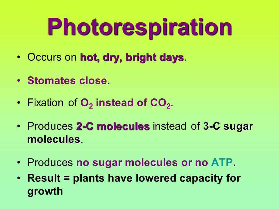 Photorespiration hot, dry, bright daysOccurs on hot, dry, bright days.