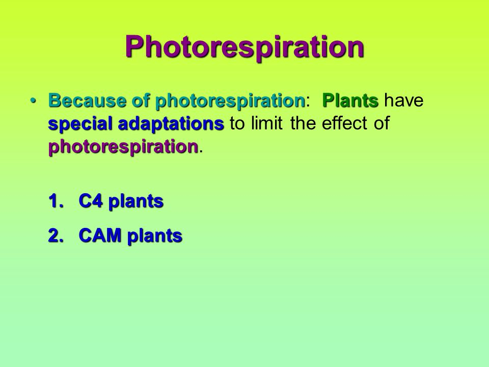 Photorespiration Because of photorespirationPlants special adaptations photorespirationBecause of photorespiration: Plants have special adaptations to limit the effect of photorespiration.