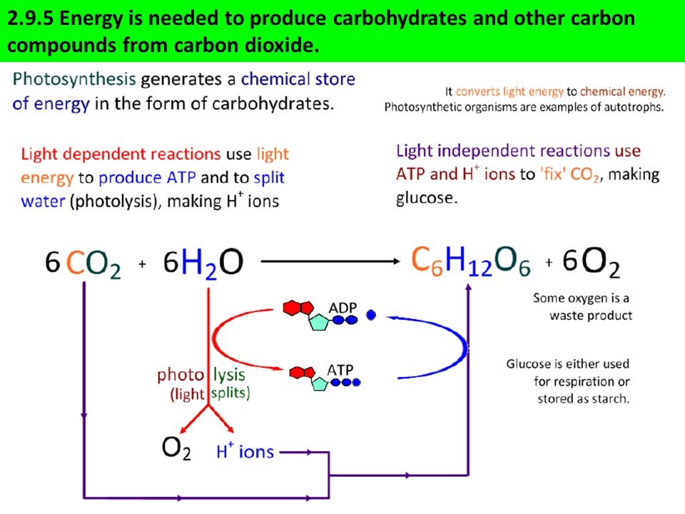2.9.5 Energy is needed to produce carbohydrates and other carbon compounds from carbon dioxide.