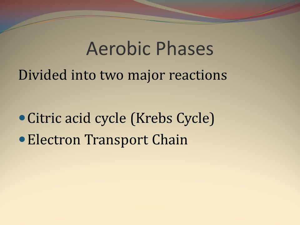 Aerobic Phases Divided into two major reactions Citric acid cycle (Krebs Cycle) Electron Transport Chain