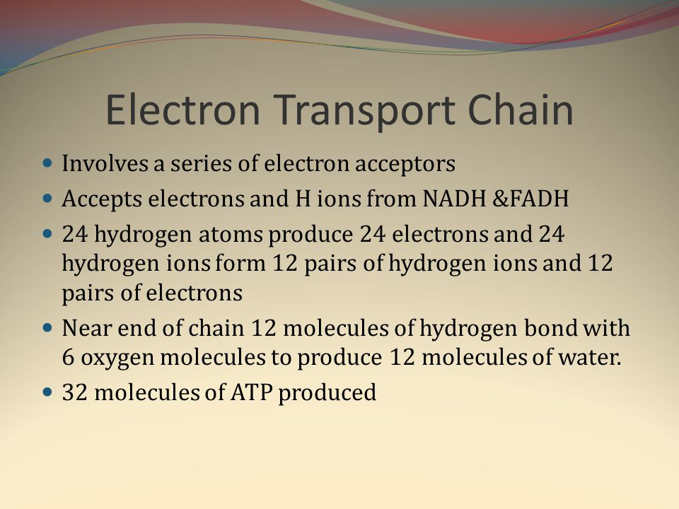 Electron Transport Chain Involves a series of electron acceptors Accepts electrons and H ions from NADH &FADH 24 hydrogen atoms produce 24 electrons a